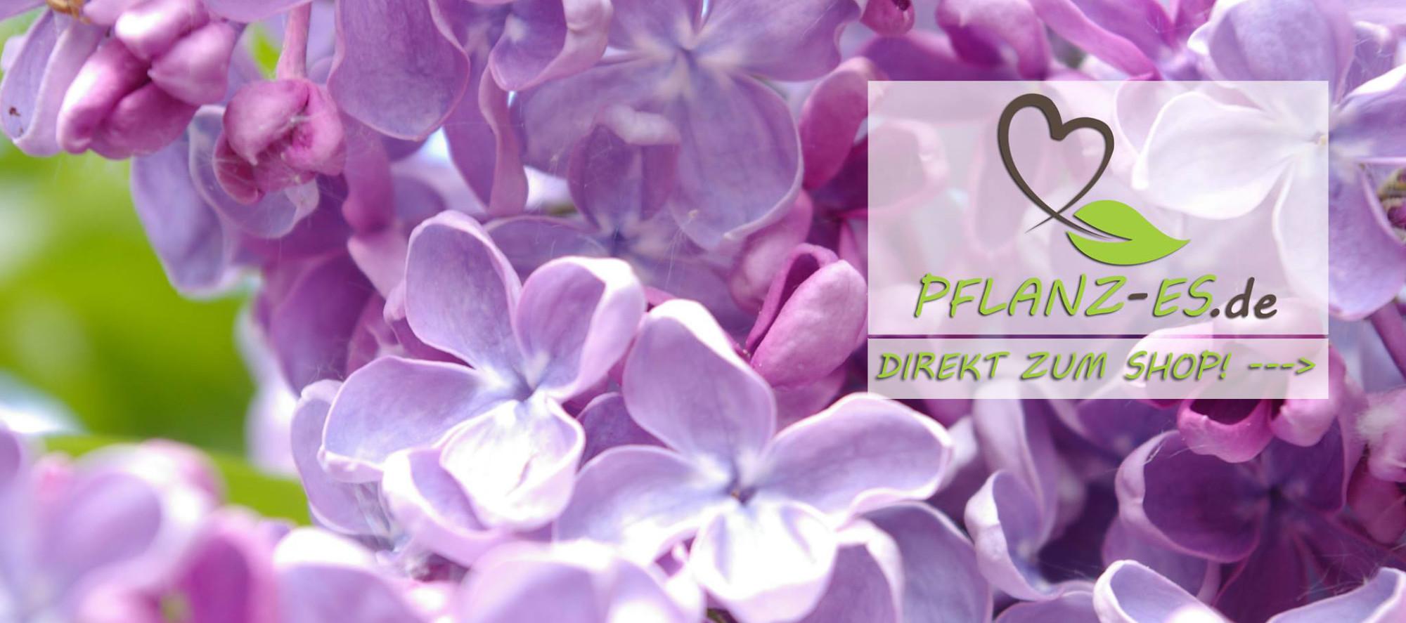 Pflanzen online bestellen – Pflanzen aus der Baumschule Pflanzenvielfalt